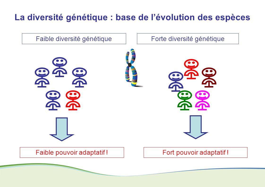 La diversité génétique : base de lévolution des espèces Faible diversité génétiqueForte diversité génétique Fort pouvoir adaptatif !Faible pouvoir ada