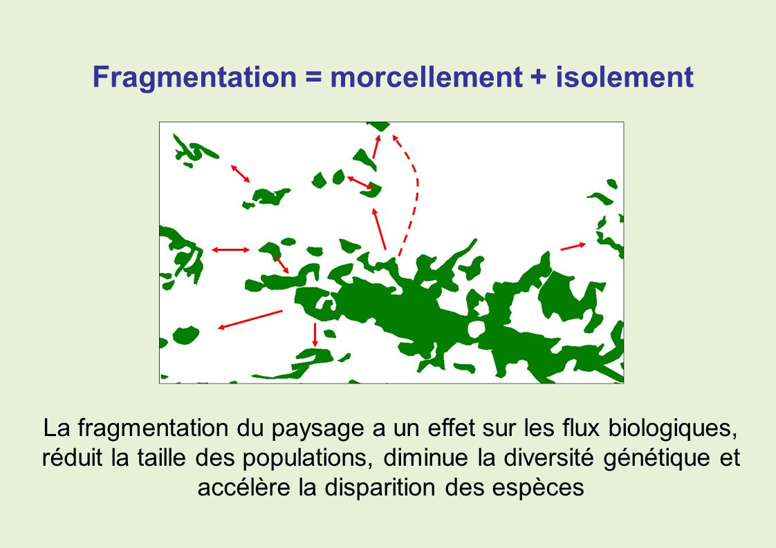La fragmentation du paysage a un effet sur les flux biologiques, réduit la taille des populations, diminue la diversité génétique et accélère la dispa