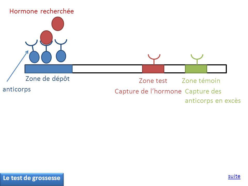 Zone de dépôt Zone testZone témoin Hormone recherchée Capture de lhormone anticorps Capture des anticorps en excès suite Le test de grossesse