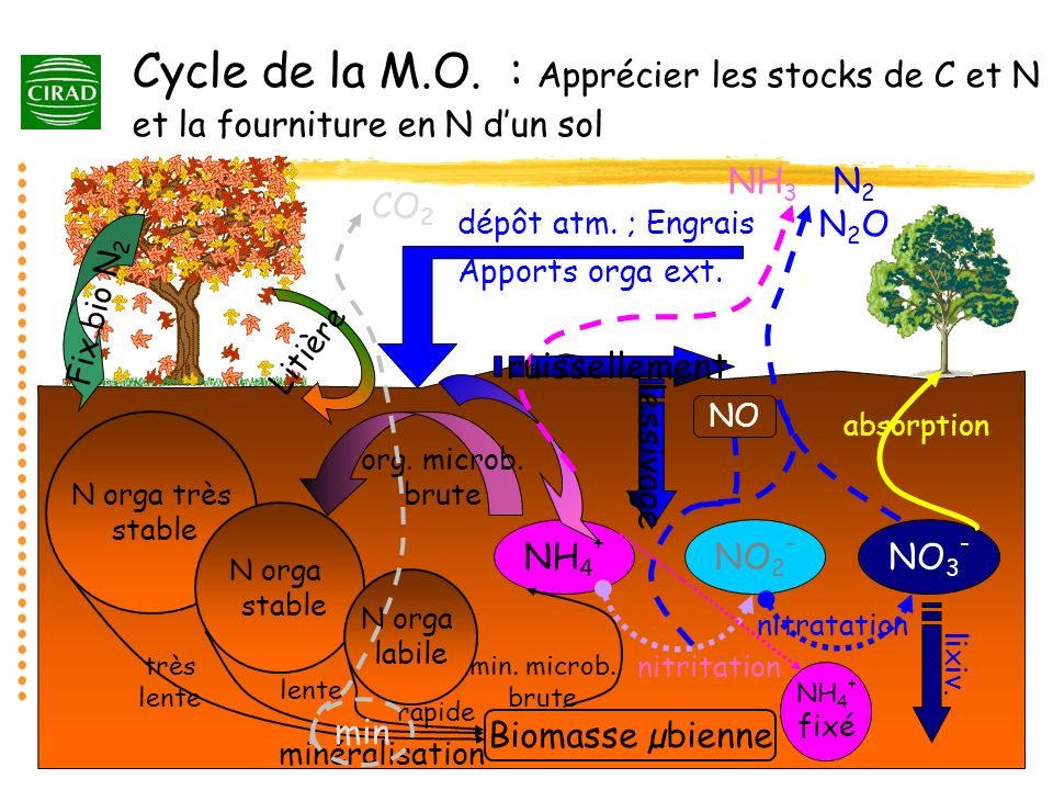 N orga très stable N orga stable N orga labile très lente lente minéralisation rapide Biomasse µbienne Fix bio N 2 Litière dépôt atm. ; Engrais Apport