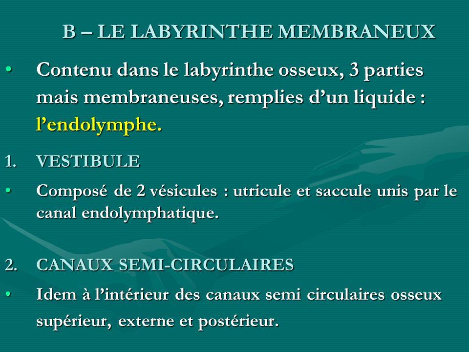 B – LE LABYRINTHE MEMBRANEUX B – LE LABYRINTHE MEMBRANEUX Contenu dans le labyrinthe osseux, 3 parties mais membraneuses, remplies dun liquide : lendo