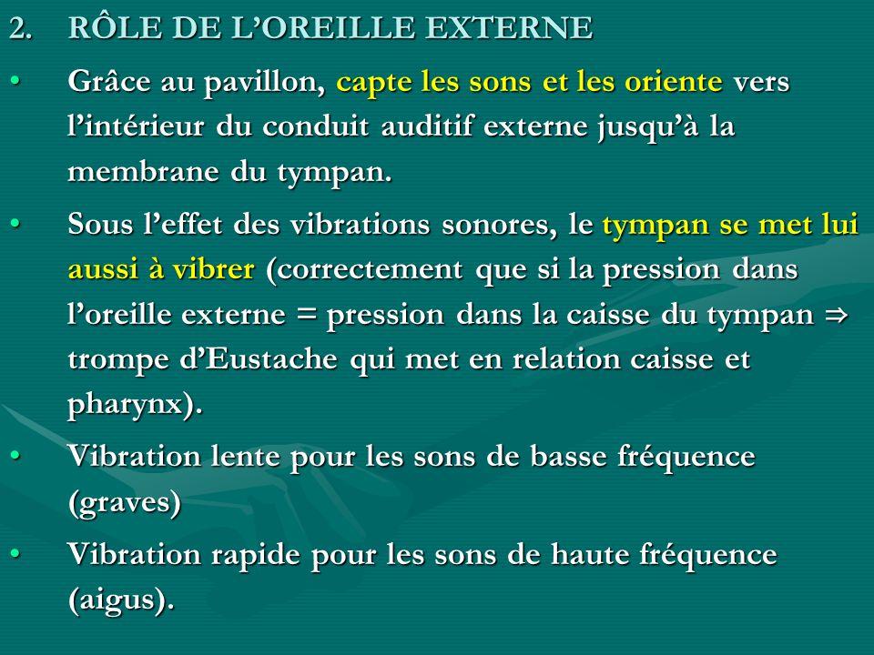 2.RÔLE DE LOREILLE EXTERNE Grâce au pavillon, capte les sons et les oriente vers lintérieur du conduit auditif externe jusquà la membrane du tympan.Gr