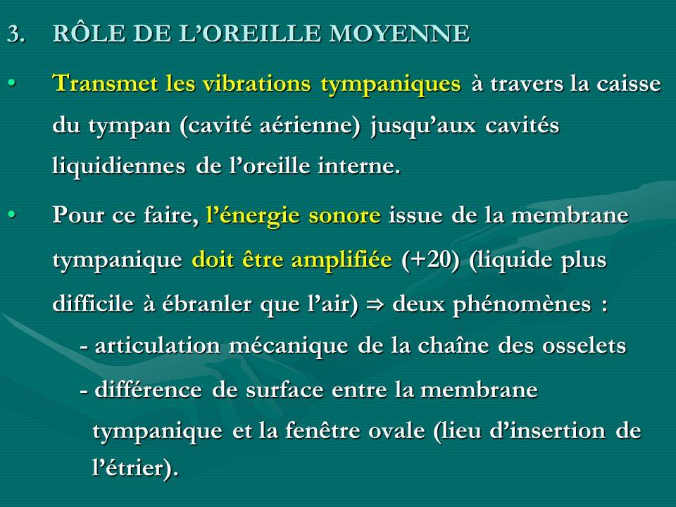 3.RÔLE DE LOREILLE MOYENNE Transmet les vibrations tympaniques à travers la caisse du tympan (cavité aérienne) jusquaux cavités liquidiennes de loreil