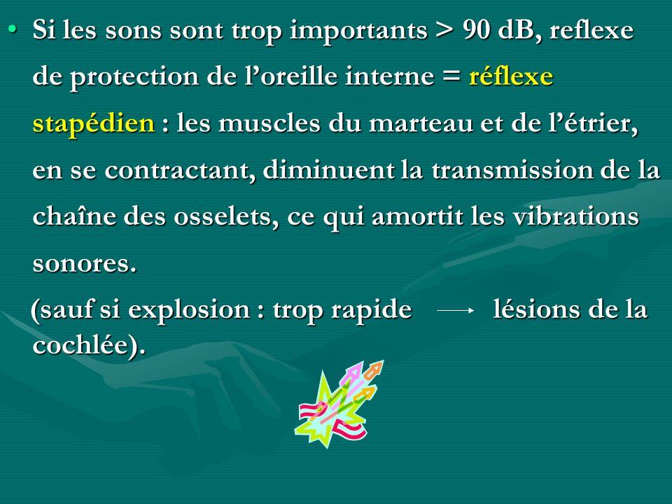 Si les sons sont trop importants > 90 dB, reflexe de protection de loreille interne = réflexe stapédien : les muscles du marteau et de létrier, en se
