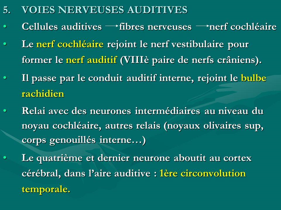 5.VOIES NERVEUSES AUDITIVES Cellules auditives fibres nerveuses nerf cochléaireCellules auditives fibres nerveuses nerf cochléaire Le nerf cochléaire
