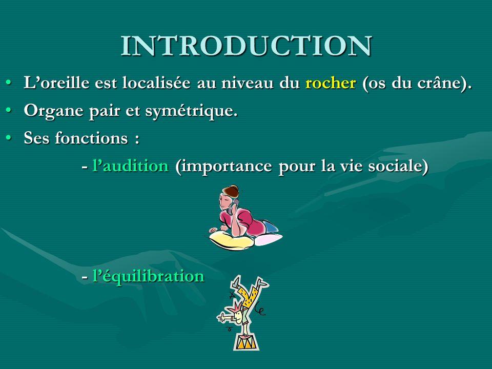 INTRODUCTION Loreille est localisée au niveau du rocher (os du crâne).Loreille est localisée au niveau du rocher (os du crâne). Organe pair et symétri