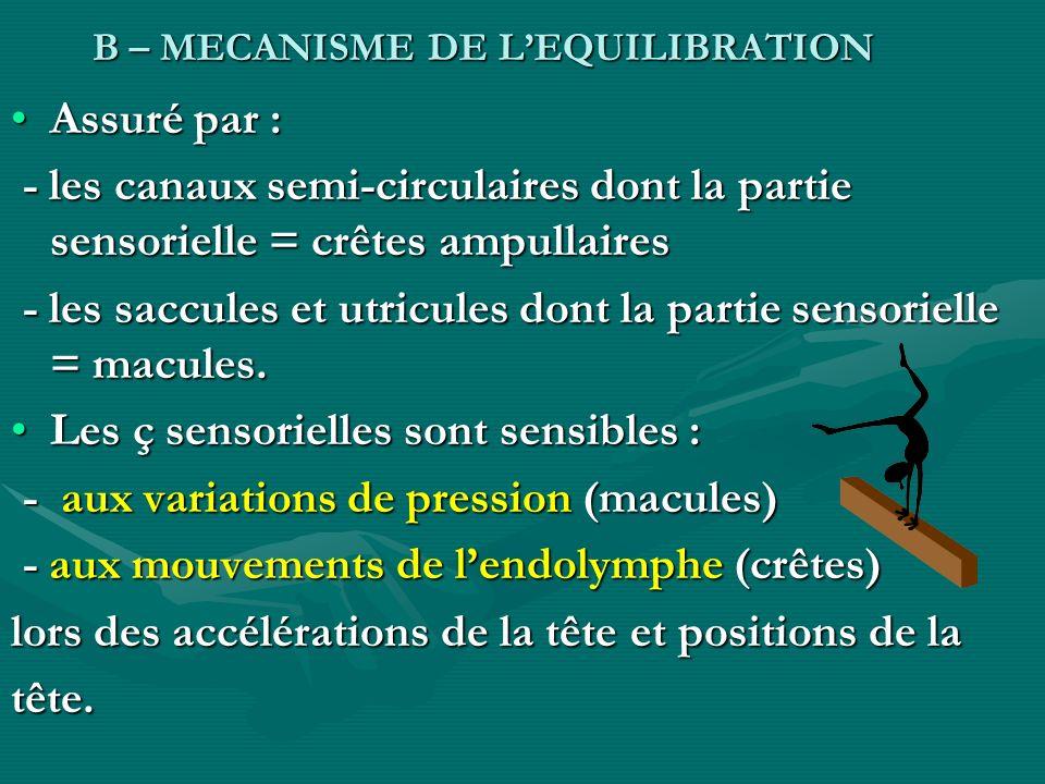 B – MECANISME DE LEQUILIBRATION B – MECANISME DE LEQUILIBRATION Assuré par :Assuré par : - les canaux semi-circulaires dont la partie sensorielle = cr