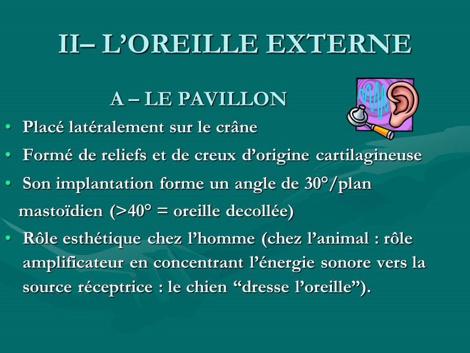 II– LOREILLE EXTERNE A – LE PAVILLON A – LE PAVILLON Placé latéralement sur le crânePlacé latéralement sur le crâne Formé de reliefs et de creux dorig
