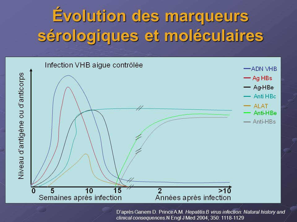 Évolution des marqueurs sérologiques et moléculaires Daprès Ganem D. Prince A.M. Hepatitis B virus infection: Natural history and clinical consequence