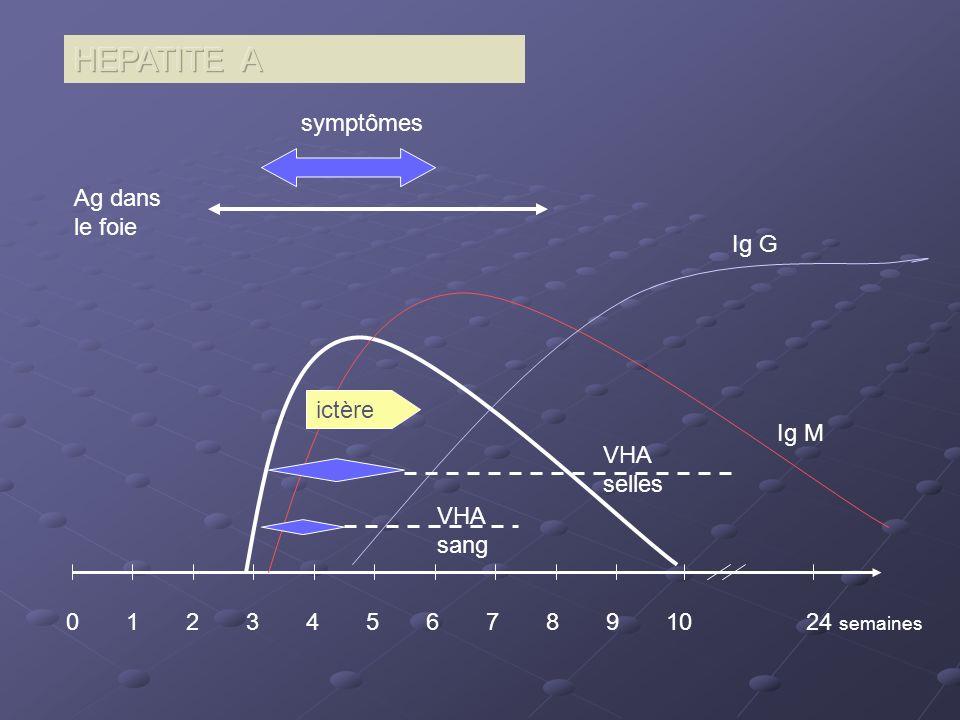 0 1 2 3 4 5 6 7 8 9 10 24 semaines Ig M Ig G symptômes Ag dans le foie ictère VHA selles VHA sang