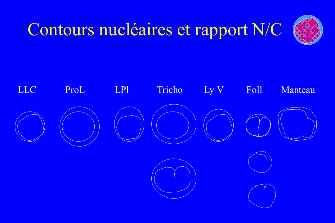 Contours nucléaires et rapport N/C LLCProLLPlTrichoLy VFollManteau