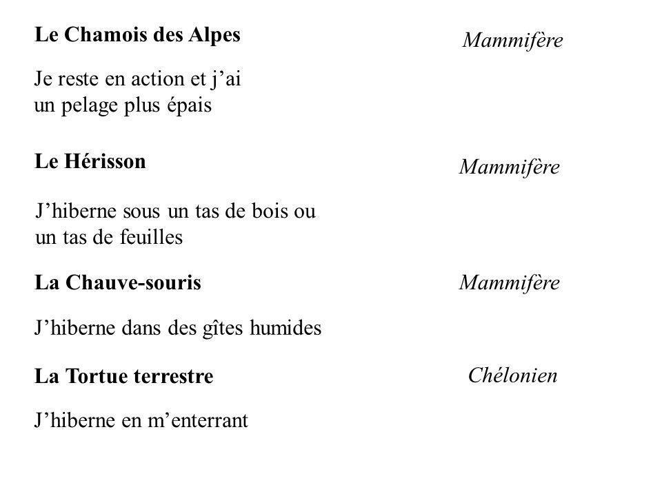 Le Chamois des Alpes Mammifère Je reste en action et jai un pelage plus épais Le Hérisson Jhiberne sous un tas de bois ou un tas de feuilles Mammifère