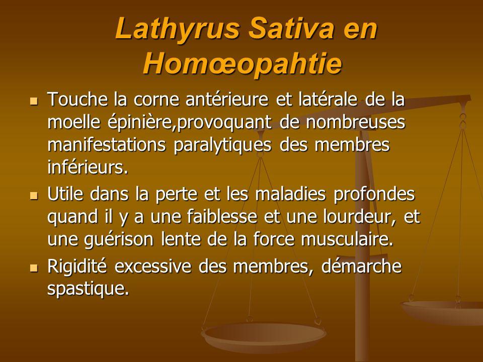 Lathyrus Sativa en Homœopahtie Lathyrus Sativa en Homœopahtie Touche la corne antérieure et latérale de la moelle épinière,provoquant de nombreuses ma