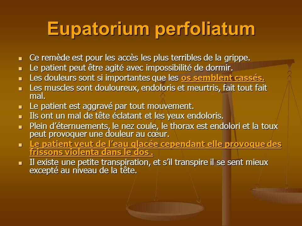 Eupatorium perfoliatum Ce remède est pour les accès les plus terribles de la grippe. Ce remède est pour les accès les plus terribles de la grippe. Le