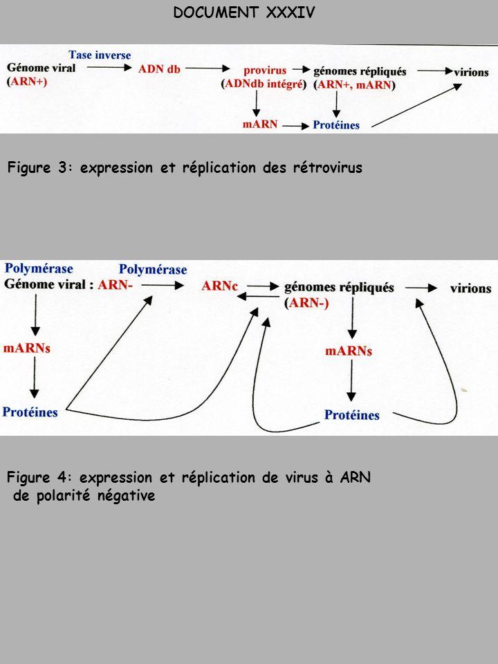 DOCUMENT XXXIV Figure 3: expression et réplication des rétrovirus Figure 4: expression et réplication de virus à ARN de polarité négative