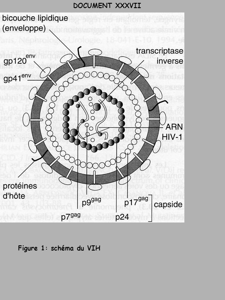 DOCUMENT XXXVII Figure 1: schéma du VIH