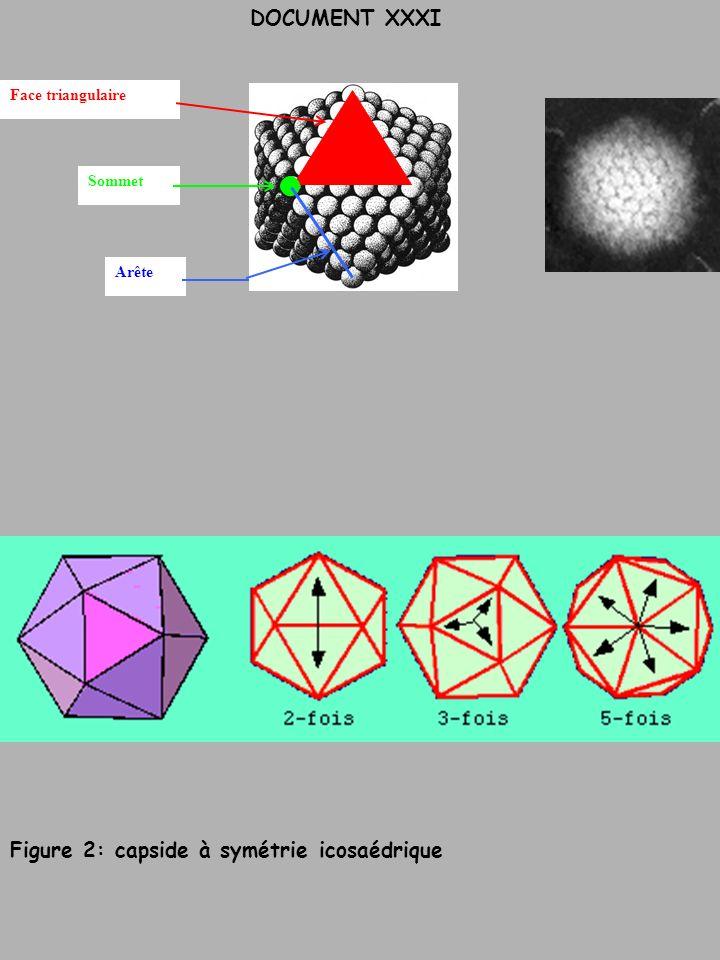 DOCUMENT XXXI Face triangulaire Arête Sommet Figure 2: capside à symétrie icosaédrique