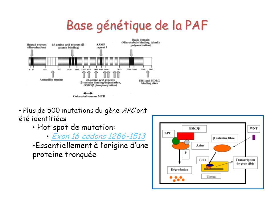 Plus de 500 mutations du gène APC ont été identifiées Hot spot de mutation: Exon 16 codons 1286-1513 Essentiellement à lorigine dune proteine tronquée