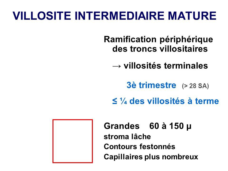 VILLOSITE INTERMEDIAIRE MATURE Ramification périphérique des troncs villositaires villosités terminales 3è trimestre (> 28 SA) ¼ des villosités à term