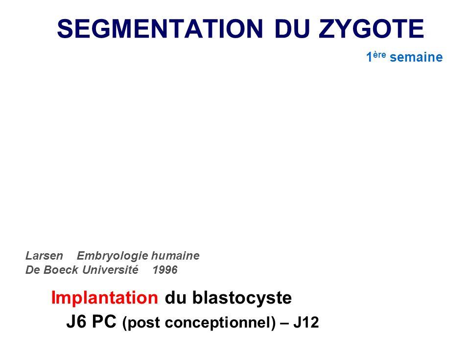 IMPLANTATION Orientation, apposition/adhésion, invasion, enfouissement Courte période « fenêtre dimplantation » Embryologie humaine F Razavi, E Escudier Masson 2008 2de SEMAINE