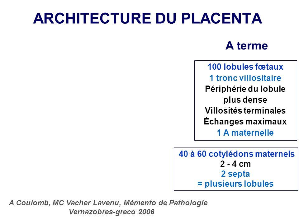 ARCHITECTURE DU PLACENTA A Coulomb, MC Vacher Lavenu, Mémento de Pathologie Vernazobres-greco 2006 40 à 60 cotylédons maternels 2 - 4 cm 2 septa = plu