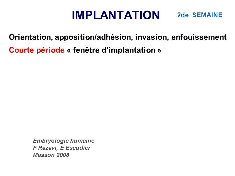 IMPLANTATION Orientation, apposition/adhésion, invasion, enfouissement Courte période « fenêtre dimplantation » Embryologie humaine F Razavi, E Escudi