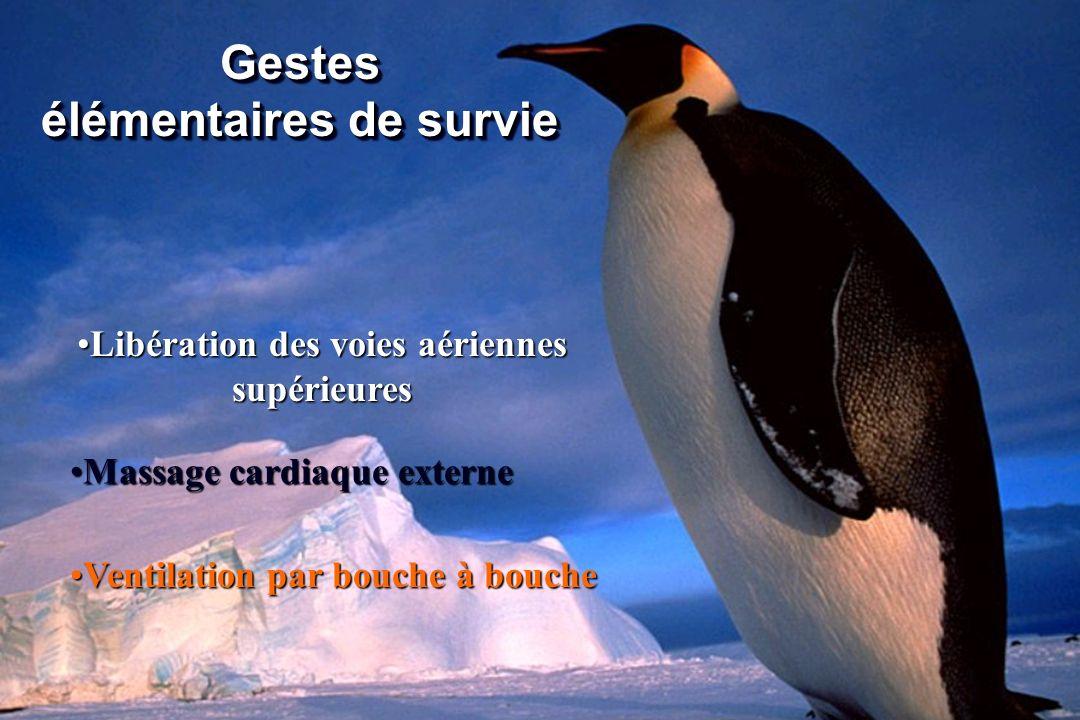 Gestes élémentaires de survie Ventilation par bouche à boucheVentilation par bouche à bouche Libération des voies aériennes supérieuresLibération des
