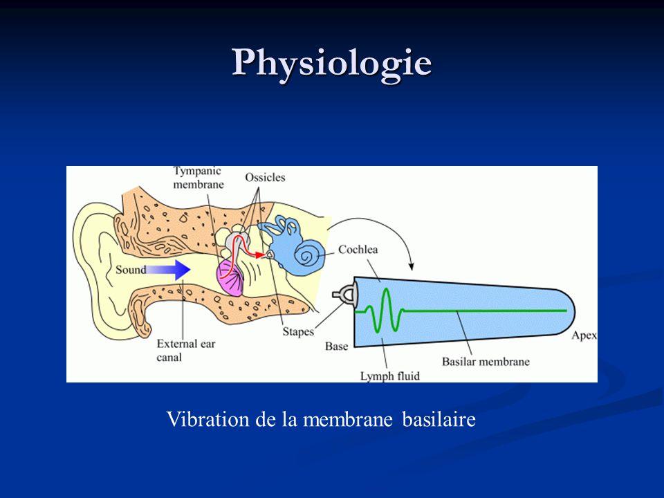 Physiologie Vibration de la membrane basilaire
