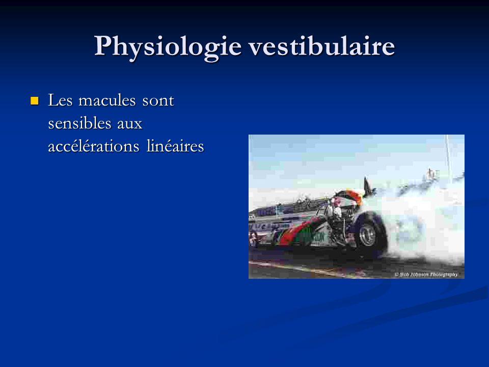 Physiologie vestibulaire Les macules sont sensibles aux accélérations linéaires Les macules sont sensibles aux accélérations linéaires