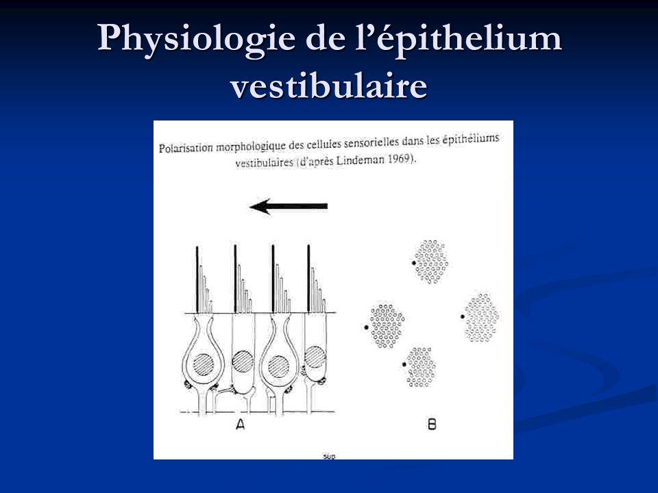 Physiologie de lépithelium vestibulaire