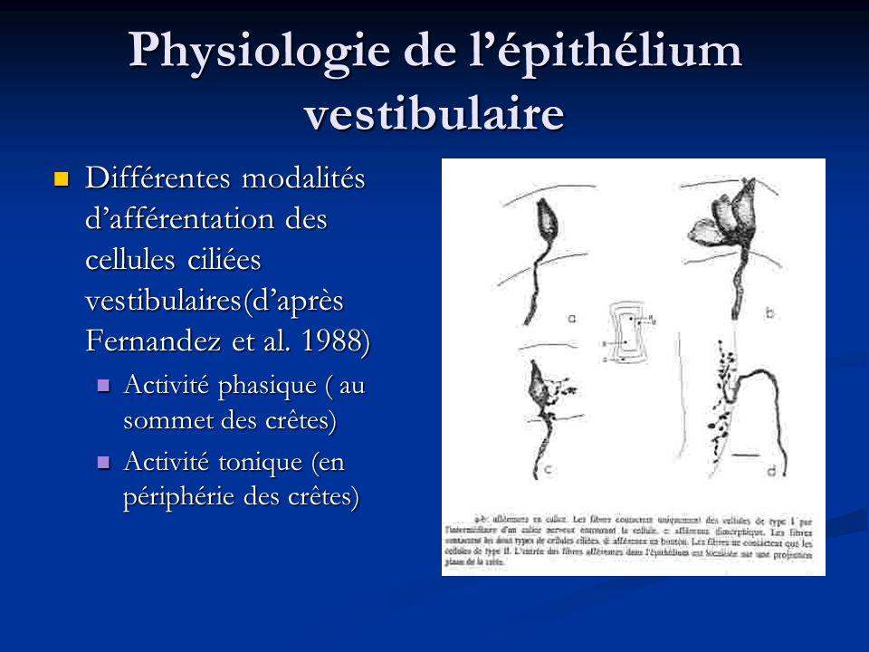 Physiologie de lépithélium vestibulaire Différentes modalités dafférentation des cellules ciliées vestibulaires(daprès Fernandez et al. 1988) Différen