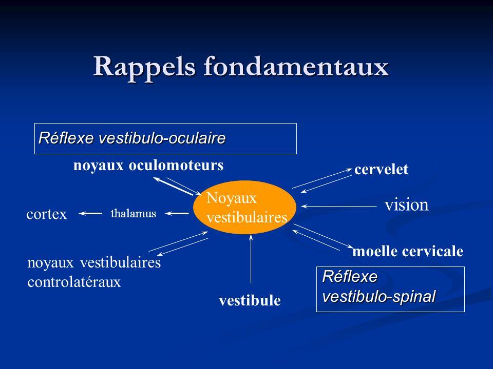 Rappels fondamentaux cervelet moelle cervicale noyaux vestibulaires controlatéraux noyaux oculomoteurs thalamus cortex vision vestibule Réflexevestibu