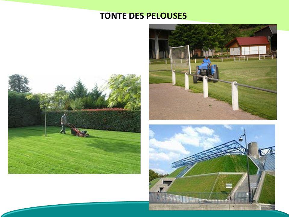 TONTE DES PELOUSES
