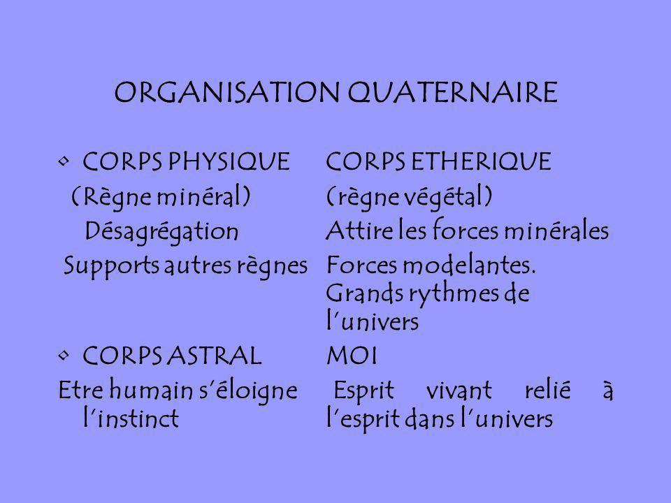 ORGANISATION QUATERNAIRE CORPS PHYSIQUECORPS ETHERIQUE (Règne minéral)(règne végétal) DésagrégationAttire les forces minérales Supports autres règnesF