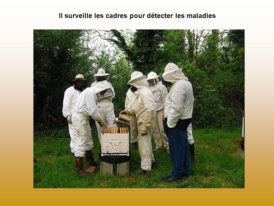 Il surveille les cadres pour détecter les maladies Extraire le dessin du livret pédagogique