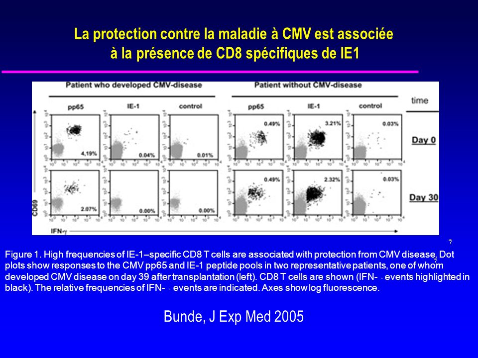 Figure 1. High frequencies of IE-1–specific CD8 T cells are associated with protection from CMV disease. Dot plots show responses to the CMV pp65 and