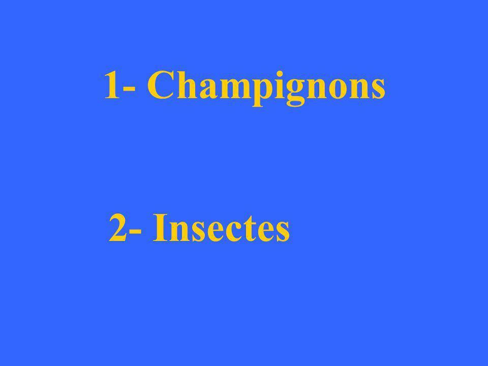1- Champignons: Pourritures Echauffures Bleuissement – Bois bleuté Mérule Trametes versicolor