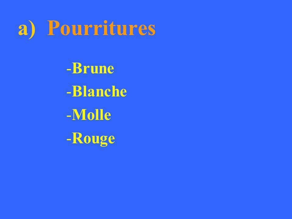 a) Pourritures -Brune -Blanche -Molle -Rouge