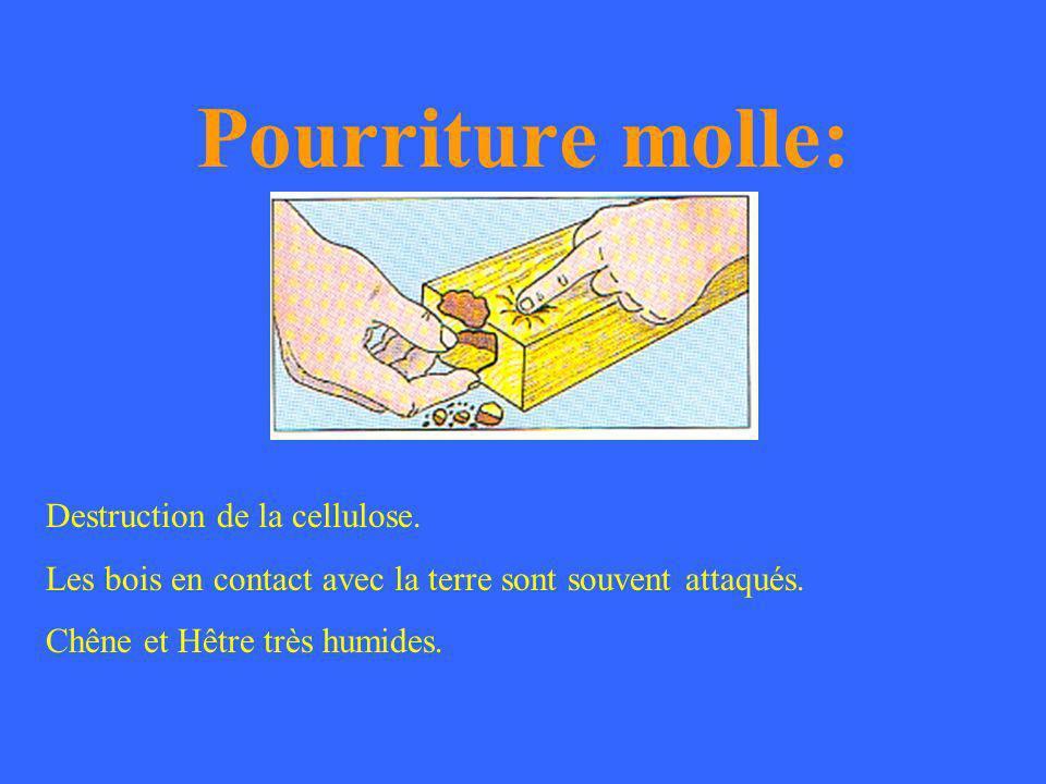 Pourriture rouge: Attaque progressive de la lignine puis de la cellulose.