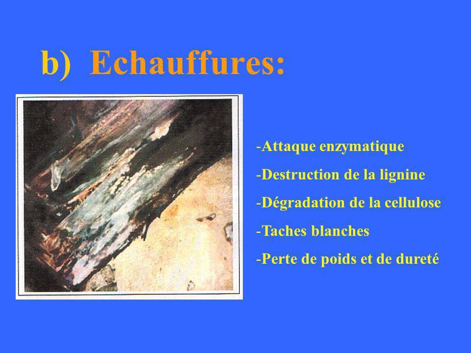c) Bleuissement: Pas de destruction du bois! Changement de coloration.
