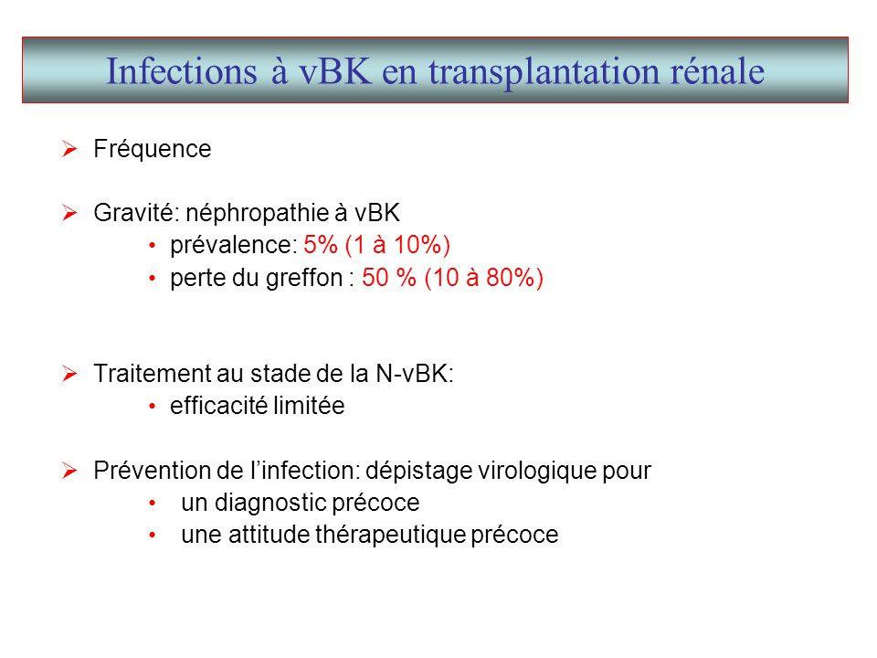 Infections à vBK en transplantation rénale Fréquence Gravité: néphropathie à vBK prévalence: 5% (1 à 10%) perte du greffon : 50 % (10 à 80%) Traitement au stade de la N-vBK: efficacité limitée Prévention de linfection: dépistage virologique pour un diagnostic précoce une attitude thérapeutique précoce