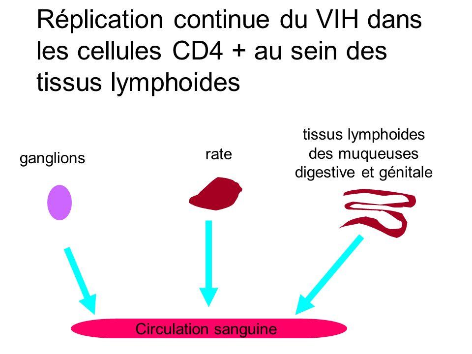 Circulation sanguine ganglions rate tissus lymphoides des muqueuses digestive et génitale Réplication continue du VIH dans les cellules CD4 + au sein