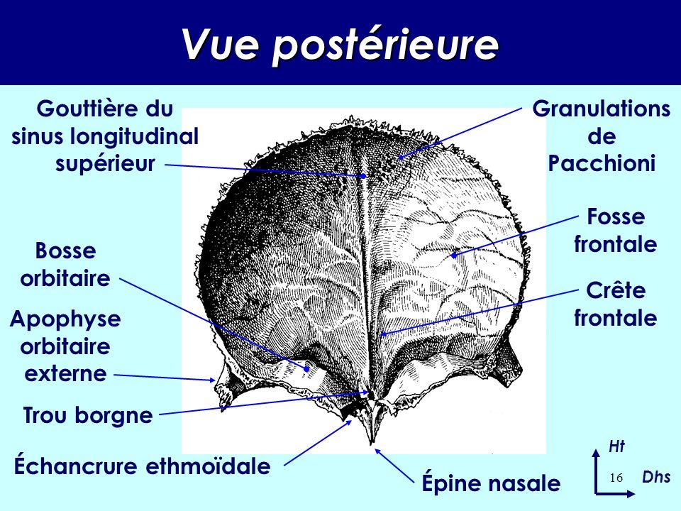 15 DESCRIPTION – face interne Partie horizontale : Au centre : l échancrure ethmoïdale.