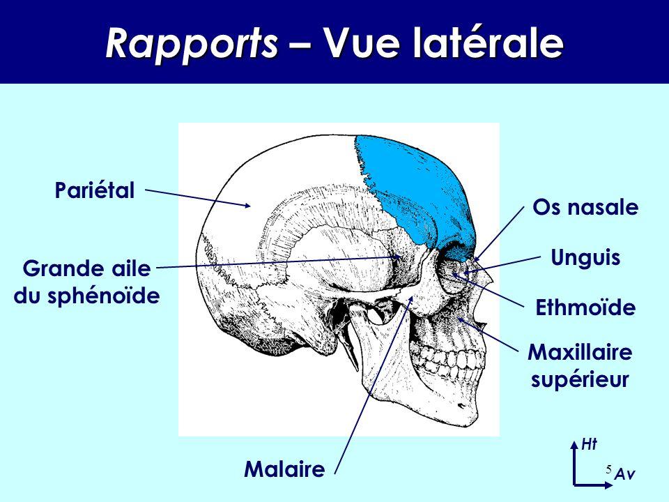 4 Rapports –Vue antérieure Ht Dhs Pariétal Grande aile du sphénoïde Malaire Maxillaire supérieur Petite aile du sphénoïde Ethmoïde Unguis Os nasale