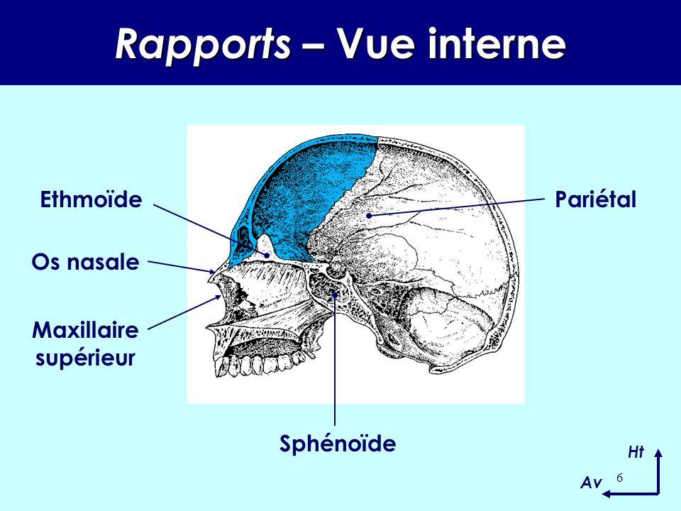 5 Rapports –Vue latérale Ht Av Pariétal Grande aile du sphénoïde Malaire Ethmoïde Unguis Os nasale Maxillaire supérieur