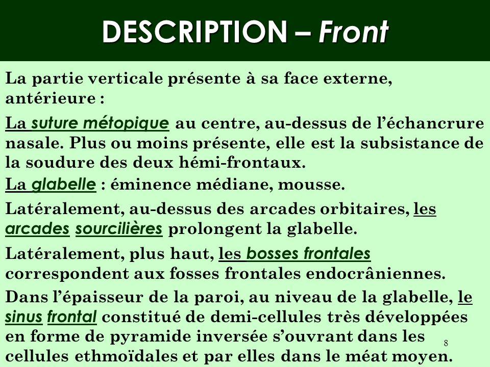 7 Rapports –Vue endocrânienne Av Dhs Ethmoïde Petite aile du sphénoïde Grande aile du sphénoïde Échancrure ethmoïdale Crête frontale Bosse orbitaire Sinus frontal