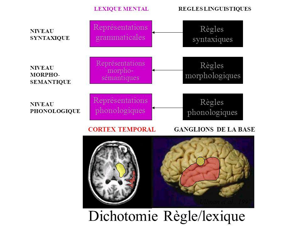 Dichotomie Règle/lexique NIVEAU SYNTAXIQUE NIVEAU MORPHO- SEMANTIQUE NIVEAU PHONOLOGIQUE LEXIQUE MENTAL Représentations grammaticales Représentations morpho- sémantiques Représentations phonologiques CORTEX TEMPORAL REGLES LINGUISTIQUES Règles syntaxiques Règles morphologiques GANGLIONS DE LA BASE Règles phonologiques Ullman et al., 1997