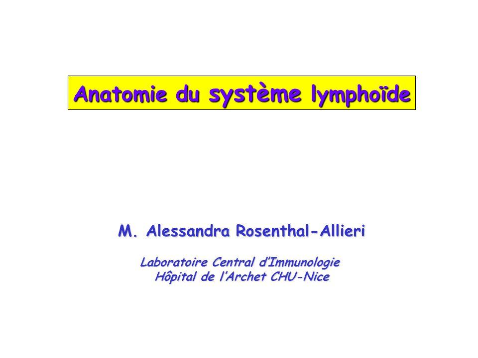 Anatomie du système lymphoïde M. Alessandra Rosenthal-Allieri Laboratoire Central dImmunologie Hôpital de lArchet CHU-Nice