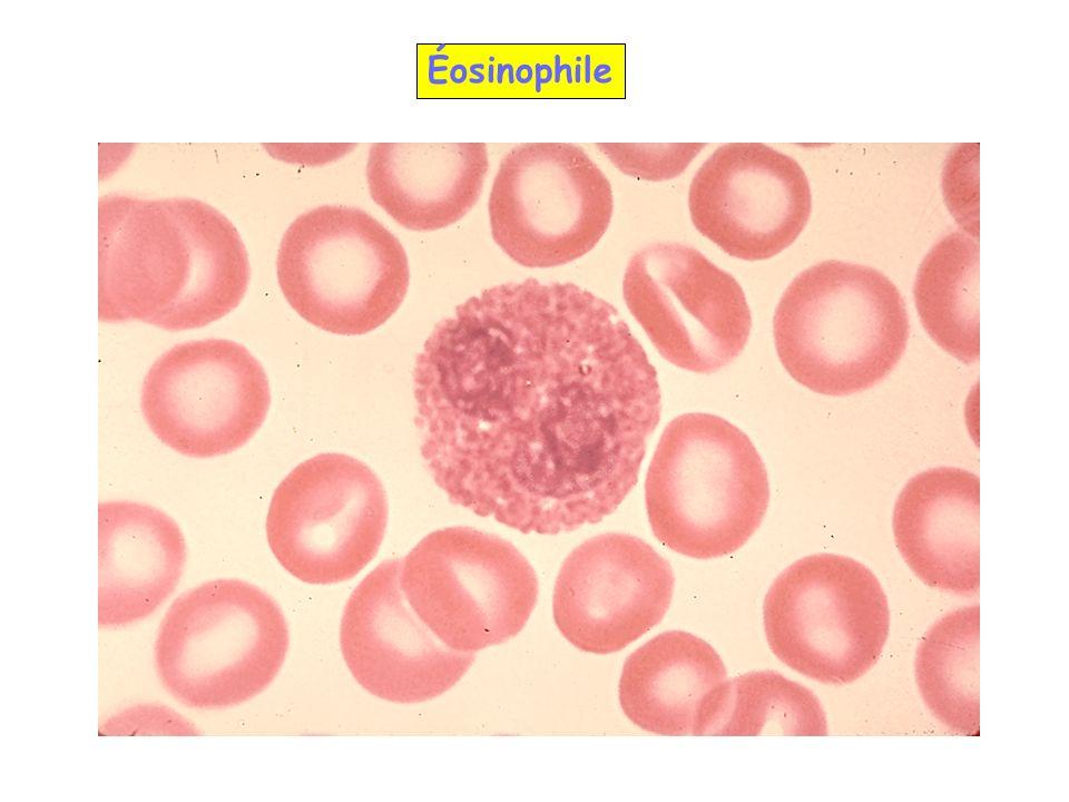 Éosinophile