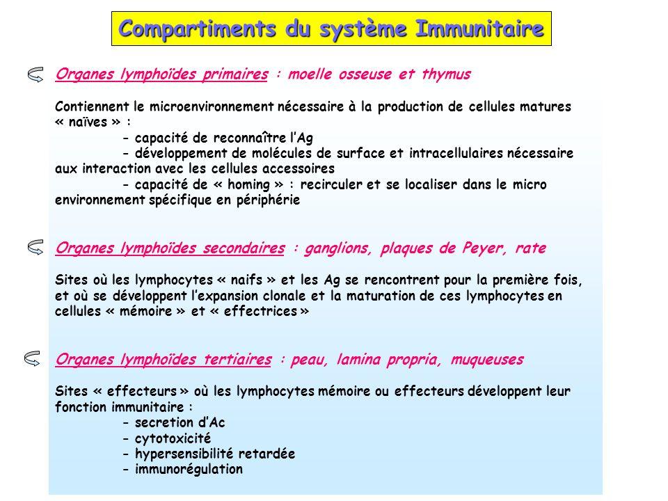 Compartiments du système Immunitaire Organes lymphoïdes primaires : moelle osseuse et thymus Contiennent le microenvironnement nécessaire à la product